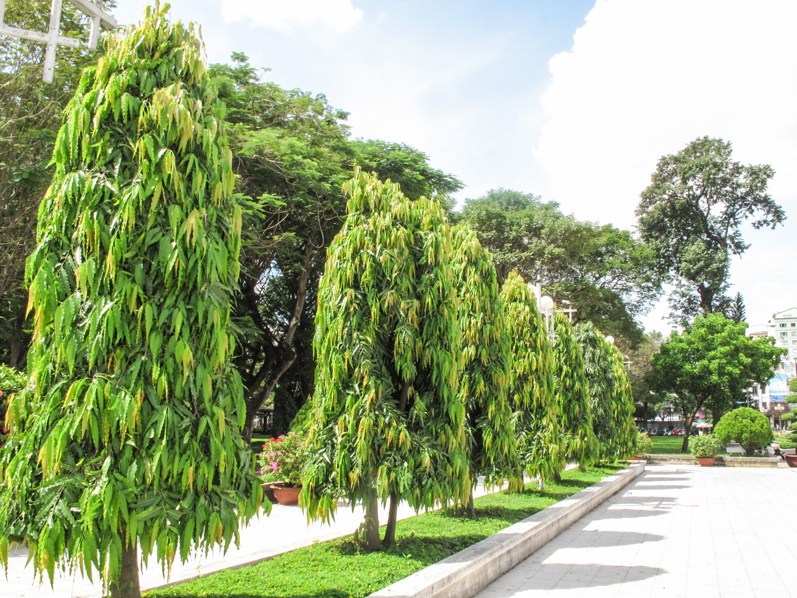 Divine Vastu Tips Plants And Trees To Keep In Your House For Wealth