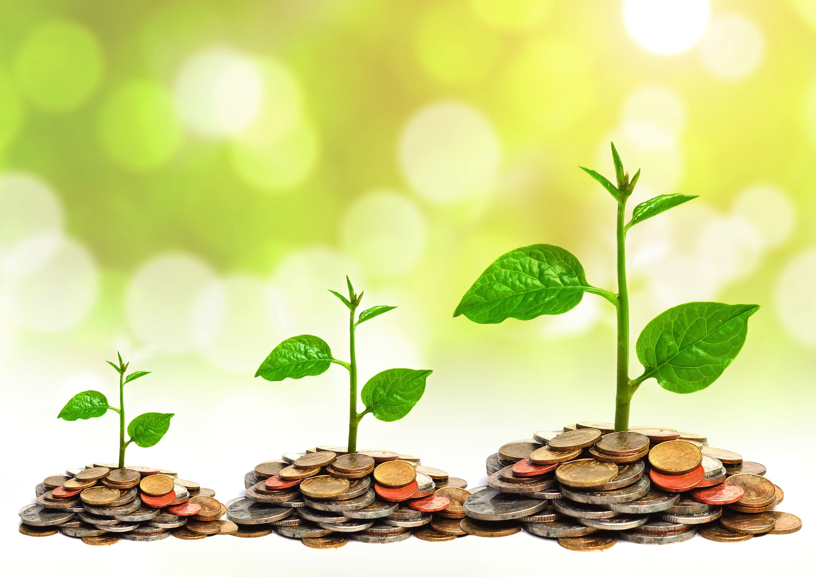 Divine Vastu Tips Plants And Trees To Keep In Your House For Wealth Prosperity