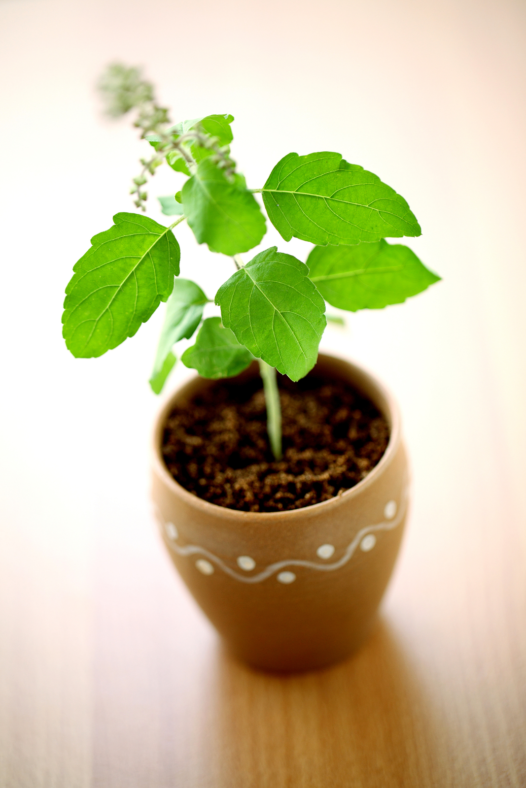 Divine Vastu Tips: Plants and Trees to Keep in Your House for Wealth